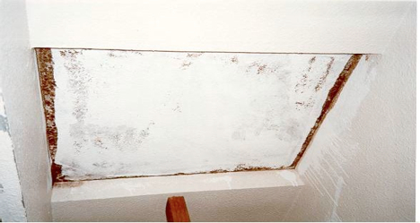 Mold Mold Guidance For Tenants And Landlords