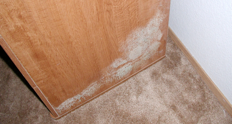 Mold In Bathroom Landlord Responsibility mold: mold guidance for tenants and landlords
