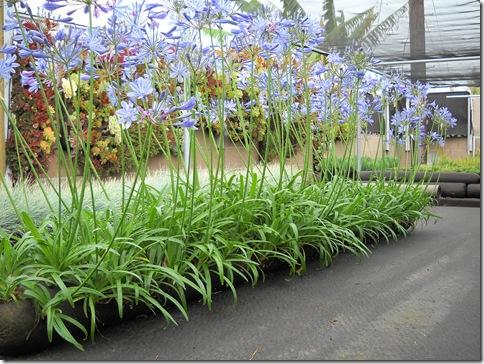 Flower Vertical Gardening