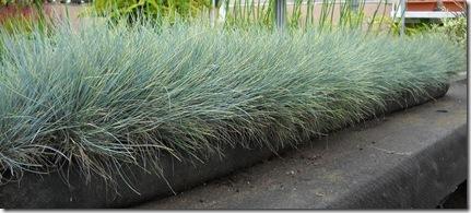 Vertical Gardening Meadow