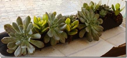 Mini Vertical Garden
